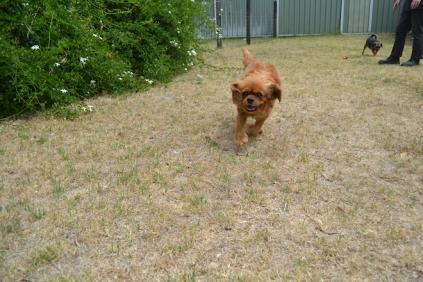 britz-banksia-park-puppies-3-of-18