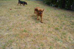 britz-banksia-park-puppies-4-of-18