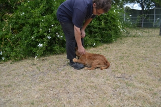 britz-banksia-park-puppies-5-of-18