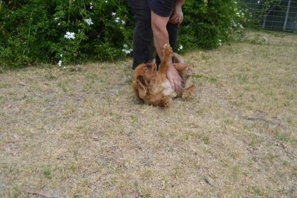 britz-banksia-park-puppies-7-of-18