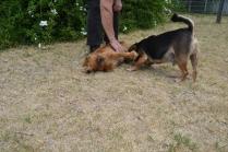britz-banksia-park-puppies-9-of-18