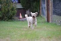 Banksia Park Puppies Jack