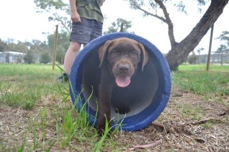 FB Banksia Park Puppies Meeka 15