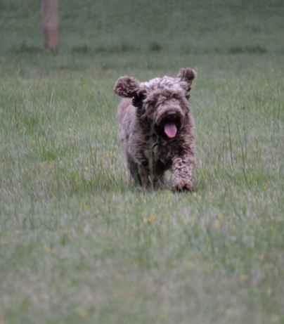 Banksia Park Puppies Whisper