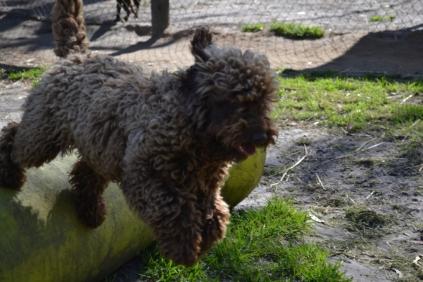 Banksia Park Puppies MayBee