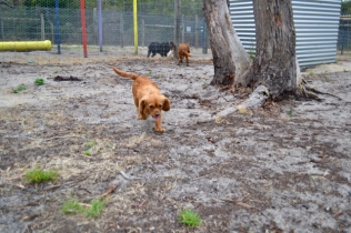 rosana-banksia-park-puppies-11-of-16