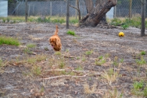 rosana-banksia-park-puppies-6-of-16