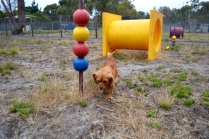 rosana-banksia-park-puppies-9-of-16