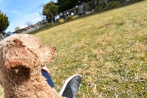 Tobasco-Poodle-Banksia Park Puppies - 24 of 80