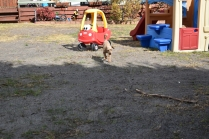 Tobasco-Poodle-Banksia Park Puppies - 41 of 80