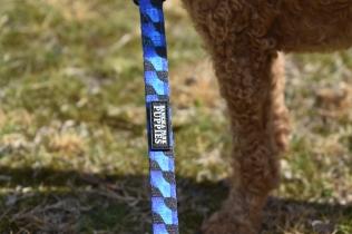 Tobasco-Poodle-Banksia Park Puppies - 65 of 80