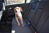 Tobasco-Poodle-Banksia Park Puppies - 73 of 80
