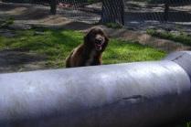 Banksia Park Puppies Walida