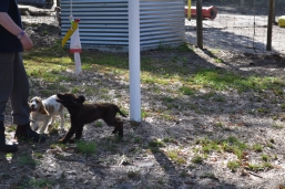 Banksia Park Puppies Missy