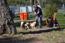 Banksia Park Puppies Tim Tam