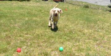 banksia-park-puppies-aino-12-of-23