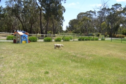 banksia-park-puppies-aino-16-of-23
