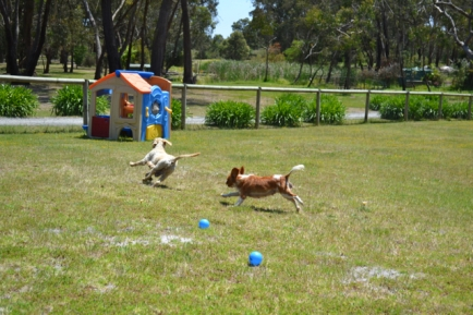 banksia-park-puppies-aino-2-of-23