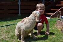 banksia-park-puppies-aino-20-of-23