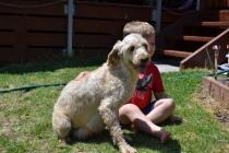 banksia-park-puppies-aino-21-of-23