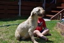 banksia-park-puppies-aino-22-of-23