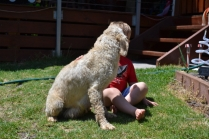 banksia-park-puppies-aino-23-of-23