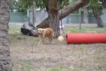 Banksia Park Puppies Amazon