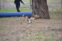 Banksia Park Puppies Boop