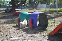 Banksia Park Puppies Floosie