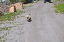 Banksia Park Puppies Fooseball - 1 of 17