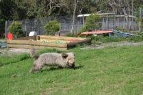 Banksia Park Puppies Fooseball - 11 of 17