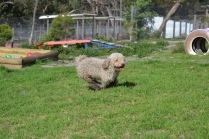 Banksia Park Puppies Fooseball - 12 of 17