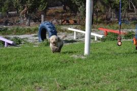 Banksia Park Puppies Fooseball - 13 of 17