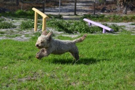 Banksia Park Puppies Fooseball - 15 of 17