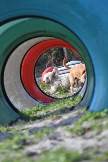 Banksia Park Puppies Fooseball - 16 of 17
