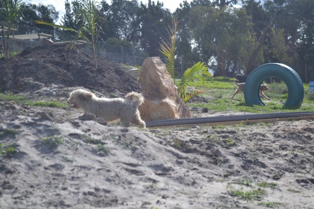 Banksia Park Puppies Fooseball - 17 of 17