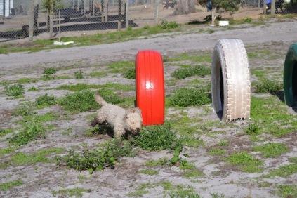 Banksia Park Puppies Fooseball - 3 of 17