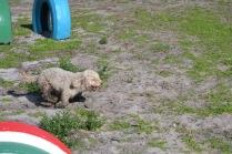 Banksia Park Puppies Fooseball - 5 of 17