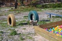 Banksia Park Puppies Fooseball - 6 of 17