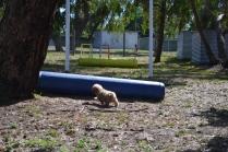 Banksia Park Puppies Fooseballl