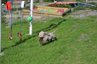Banksia Park Puppies Fooseball - 8 of 17