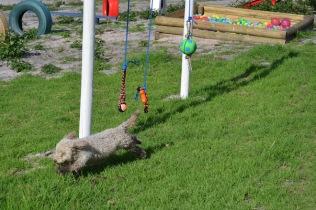 Banksia Park Puppies Fooseball - 9 of 17