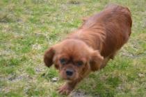 Banksia Park Puppies Hala - 7 of 31