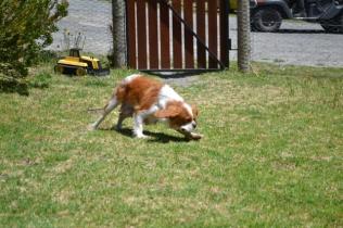 banksia-park-puppies-hera-1-of-16
