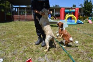 banksia-park-puppies-hera-15-of-16