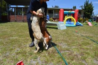 banksia-park-puppies-hera-16-of-16