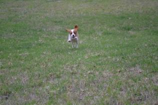 Banksia Park Puppies Hera