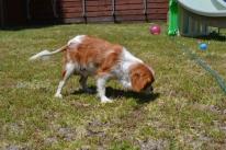 banksia-park-puppies-hera-5-of-16