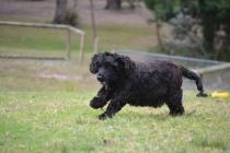 Banksia Park Puppies Mainie