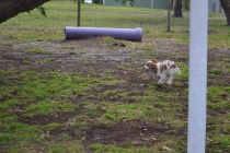 banksia-park-puppies-missy-16-of-40